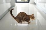 Понос и рвота у кошки: причины, первая помощь, лечение, способы, обзор препаратов, советы ветеринаров