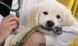 Привлекает щенки: что это такое, особенности процедуры