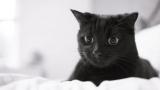 Как proglistogonit кошка: обзор употребляющих наркотики, медицинские советы, отзывы