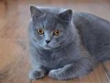 Оригинальные и забавные клички кошек - список, интересные факты и отзывы