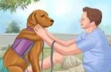 Куда деть собаку, если не нужно, человеческих способов избавиться от собак, возможность найти новых хозяев