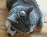 Поверните кошек: причины, симптомы, методы лечения