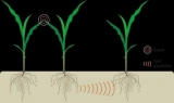У растений обнаружена система связи через корни