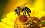 Ученые нашли среди пчел гопники