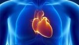 На 3D-принтере сердце напечатаны мышц