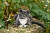 Что будет если обрезать усы коту? Почему усы кошка нуждается
