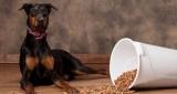 Хороший и недорогой корм для собак: описание, производители