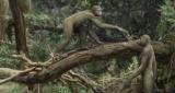 Предки человека прямой кишки стало раньше, чем считалось ранее