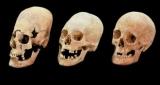 Найденные в Германии, Удлиненные черепа были невесты Востока