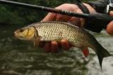Рыбалка на голавля осенью: особенности и общие принципы