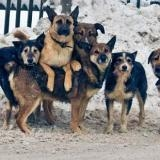 Макс Поляков «очищает» Винницу от бродячих собак