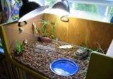 Ультрафиолетовая лампа для черепахи: выбор, инструкция по эксплуатации. Если вам нужна черепаха ультрафиолетовая лампа