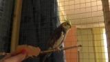 Как поймать попугая: методы и советы