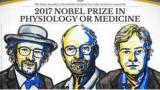 Нобелевской премии-2017: Объявлены лауреаты по физиологии и медицине