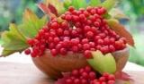 Какой рецепт калины от кашля лучше применить во время простуды?