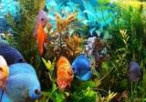Аквариум харациновые рыбки: фото и имена