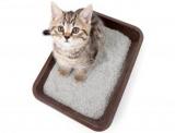 Как приучить месячного котенка к лотку: методы и рекомендации. Какой лоток лучше для котенка