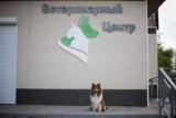 Ветеринарные клиники в Комсомольске-на-амуре: адреса, услуги,