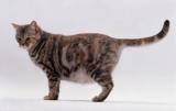 Можно ли давать уголь и кошек: симптомы, потребность, дозы, советы ветеринаров