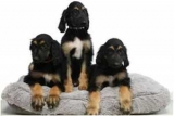 Вторая копия: клон собаки клон