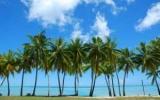 Пальмы скоро расти в северо - ученые