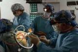 Ученые смогли поддерживать жизнь мозга без тела