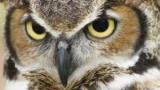 Создан эмулятор птица видения камера
