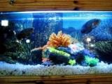 Самый дорогой Aquarium рыбка в мире
