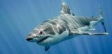Рыбалка на акулу: особенности рыбной ловли подводного хищника
