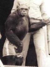 Ученый: США создали гибрид человека и обезьяны