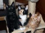 Почему кошка гадит где попало: причины, психология поведения кошек, методы и способы, отучить питомца гадить в неположенном месте