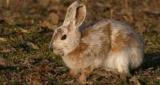 Из-за глобального потепления, зайцы перестали балета