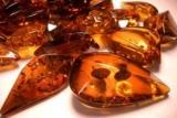 Искусственный Янтарь: описание, внешний вид, в отличие от этого, производство и изготовление искусственного янтаря своими руками