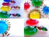 Цвет муравьев: Как безопасно покрасить насекомых